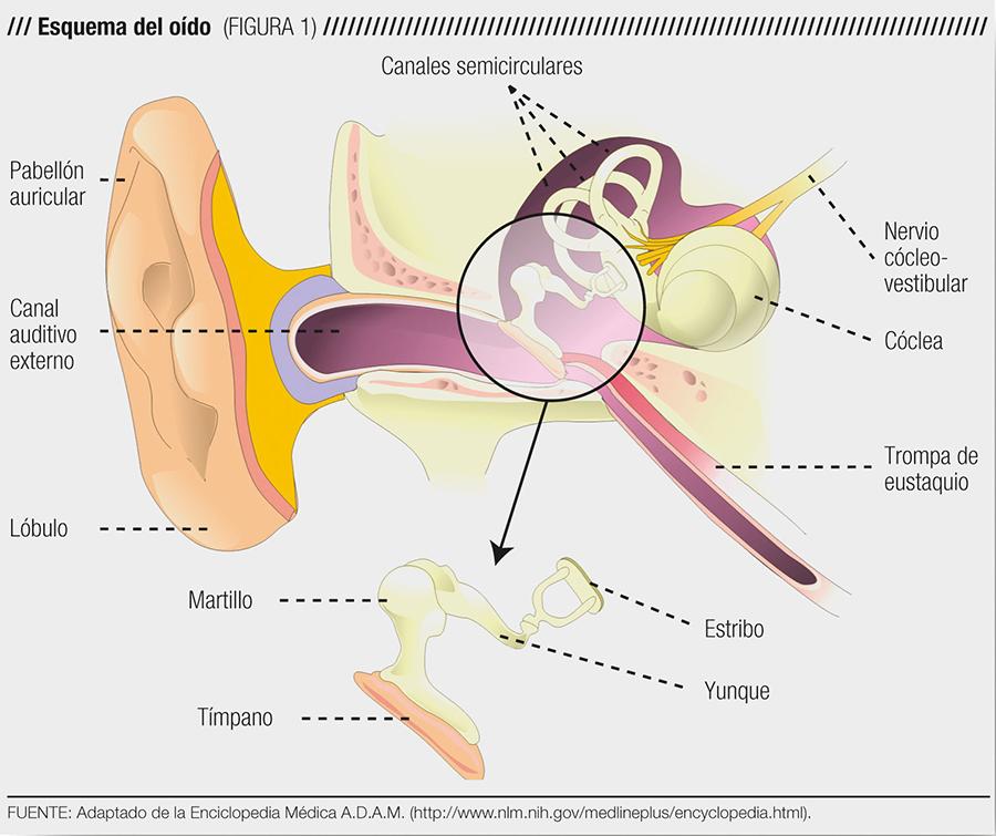 Presbiacusia: La otra cara de la sordera