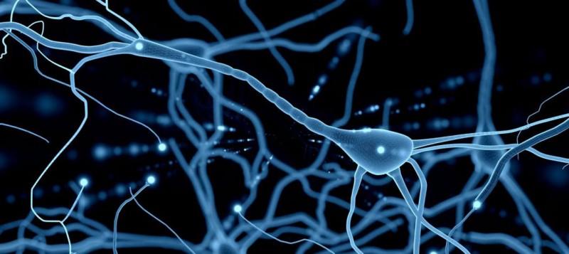 ¿Para qué sirven estas neuronas… en tu oído?