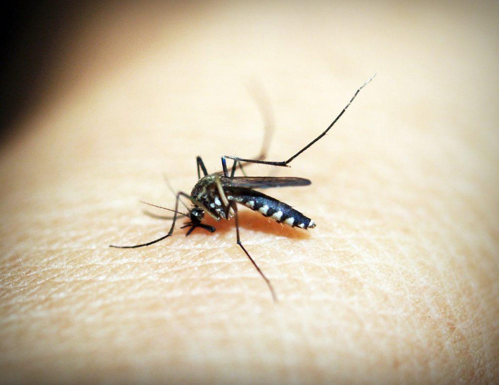 Medicamento contra la malaria podría ayudar a prevenir la pérdida de audición hereditaria